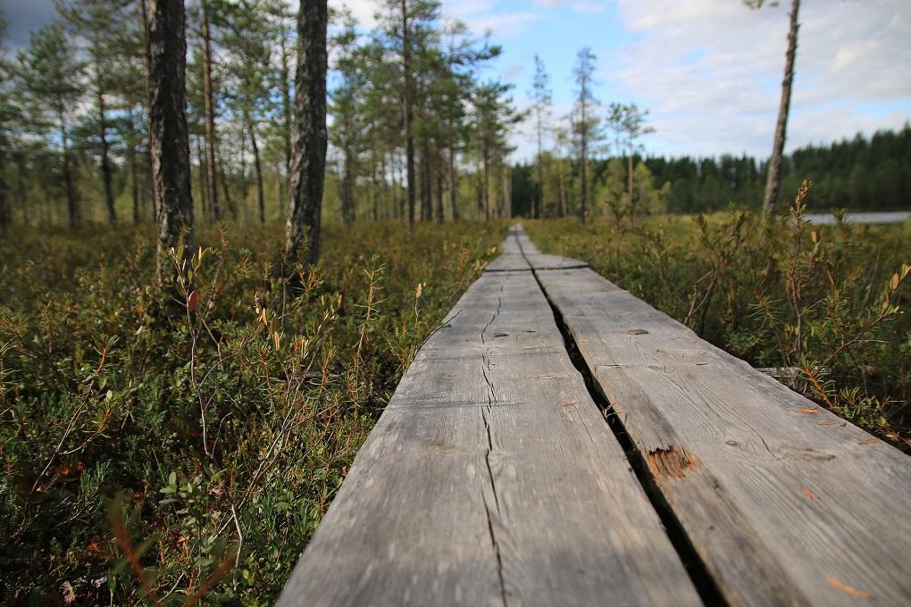 Faire soi-même une terrasse en bois